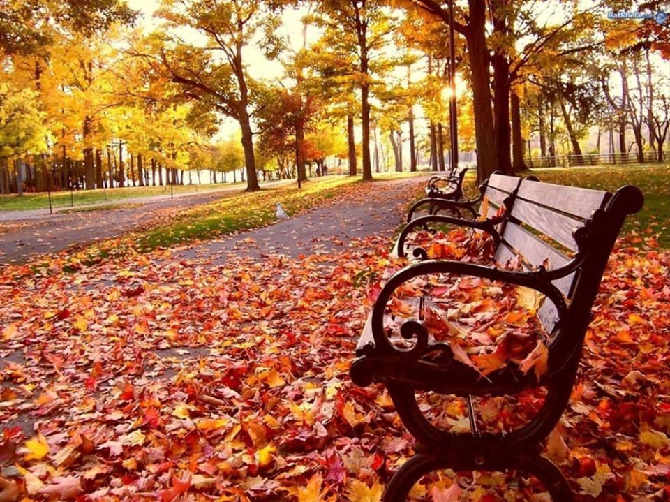 AE-őszi-fák